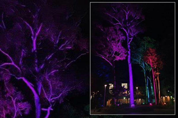 ShowPRO Fusion wash light up The University of Newcastle
