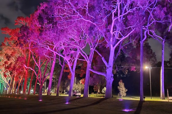 Kings Park Canopy Lit with Martin Exterior™ Inground 410s